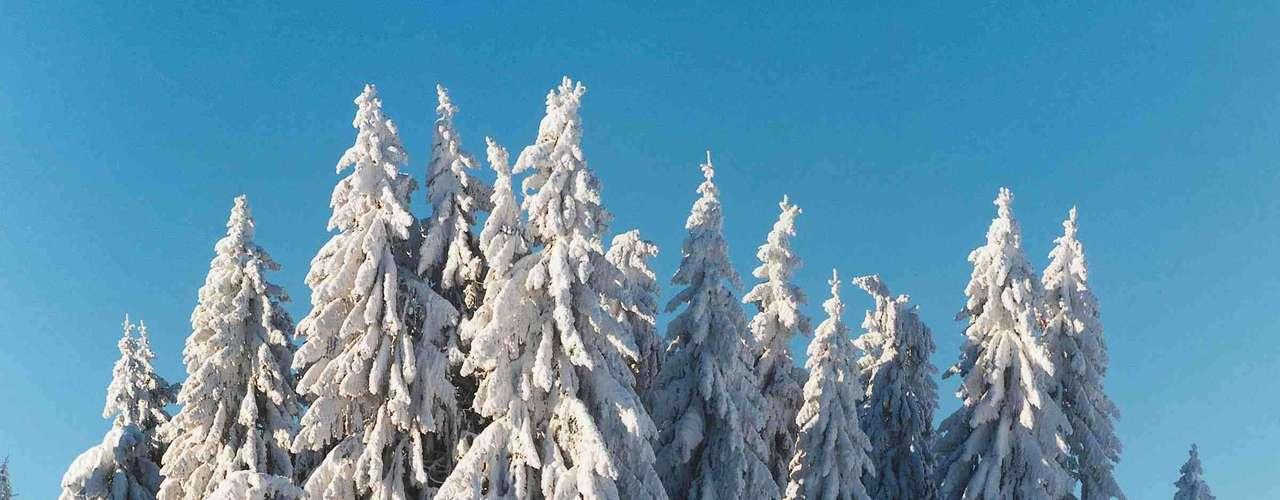 Floresta Negra, Alemanha: muitos dos contos dos irmãos Grimm foram situados nesta floresta situada ao longo do rio Reno, no Sudoeste da Alemanha. A Floresta Negra é tão densa que a luz do sol raramente passa entre as copas das árvores, criando um cenário ideal para fábulas de personagens como lobisomens, bruxas e gnomos
