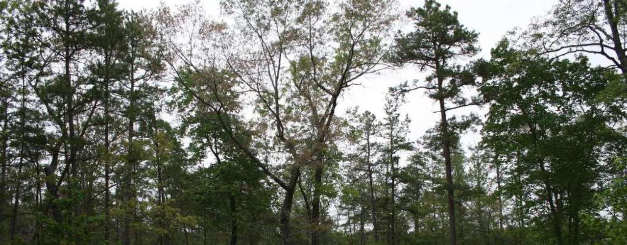 Devils Tramping Ground: a uma curta distância de Siler City, no estado americano da Carolina do Norte, uma área de acampamento em meio à floresta é conhecida como Devils Tramping Ground (A Zona de Caminhadas do Diabo, em tradução livre). A lenda diz que um grande anel de terra onde a vegetação não cresce é usado pelo diabo para andar em círculos durante as noites, assustando os visitantes