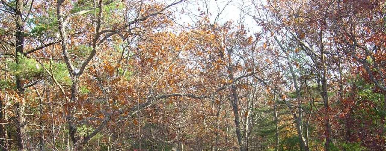 Floresta Estadual de Freetown-Fall River, Estados Unidos: a Floresta Estadual de Freetown-River faz parte do Triângulo de Bridgewater, uma área do sudeste do estado americano de Massachusetts, conhecida pela sua intensa atividade paranormal. A floresta foi tomada de nativos americanos,  que deixaram para trás vários  cemitérios que teriam sido palco de assassinatos satânicos nas décadas de setenta e oitenta. Hoje, o local recebe  diferentes aparições de OVNIs e fenômenos inexplicáveis