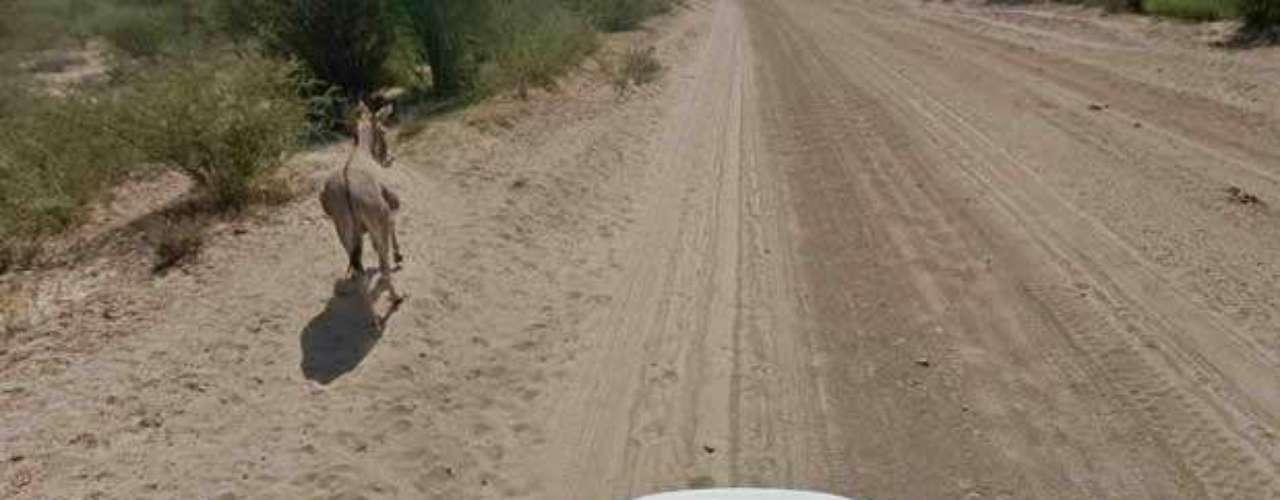 Na segunda imagem, o burro aparece se levantando do chão para dar passagem ao veículo do Google