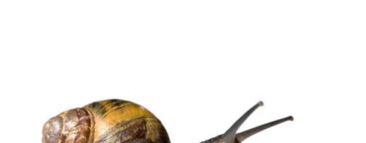 Uma bolsa cheia de caracóis