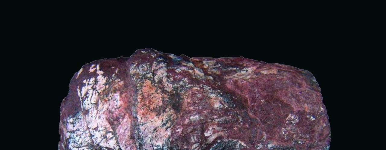 Cientistas descobriram no Rio Grande do Sul o mais antigo fóssil de ovos de tênia já registrado. Ele estava dentro de um coprólito (fezes fossilizadas) de tubarão de 270 milhões de anos