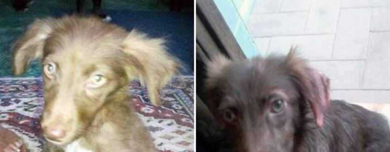 Outros cães instalados na hospedaria também sofreram maus tratos. Na foto, o cachorro Adolfo antes e após ser resgatado