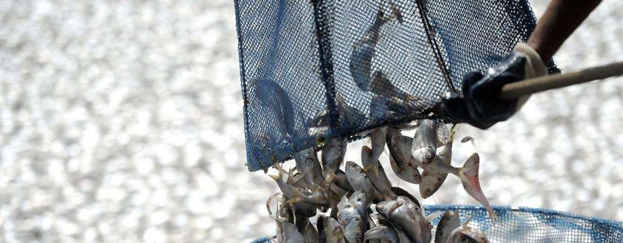 Mais de 100 garis da Comlurb trabalham na retirada dos peixes mortos