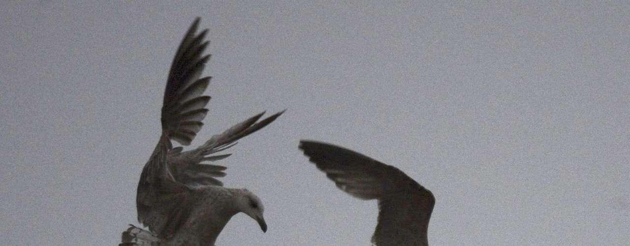 13 março -Imagem mostra um pássaro chegando e outro saindo do topo da chaminé da Capela Sistina