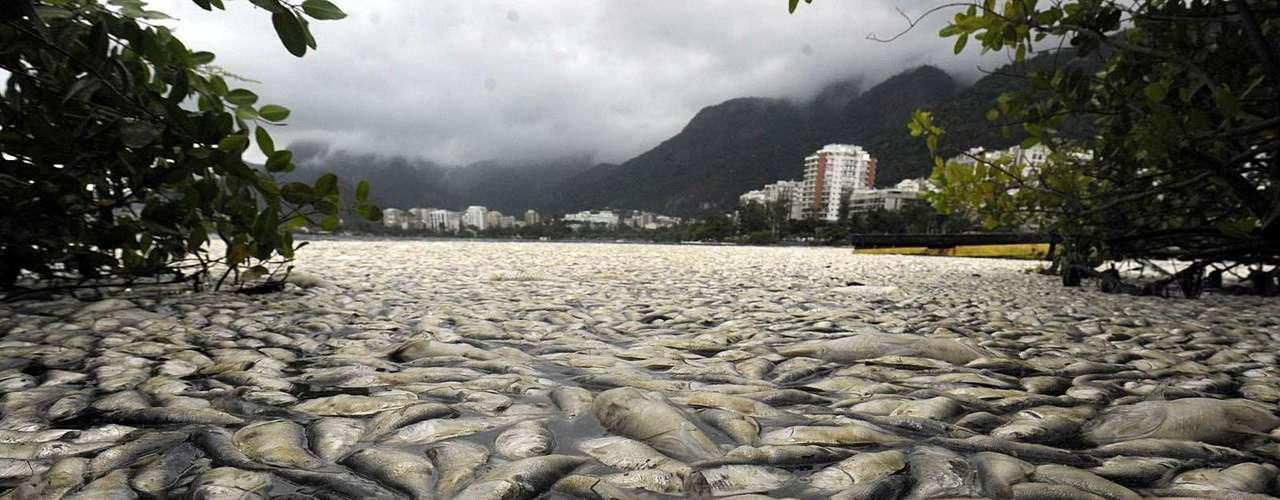 O ambientalista Mário Moscatelli cobrou da secretaria municipal de meio ambiente ações preventivas quando os níveis de oxigênio tiverem em queda
