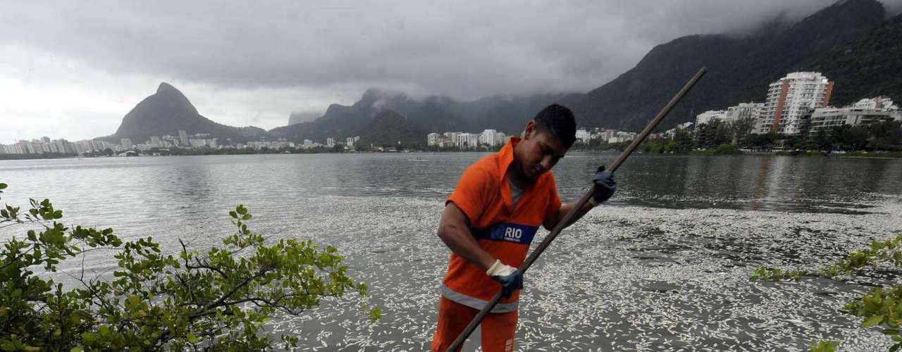 A empresa responsável pela limpeza pública do Riojá retirou 65 toneladas e ainda está trabalhando para tirar os peixes mortos do espelho d'água da lagoa