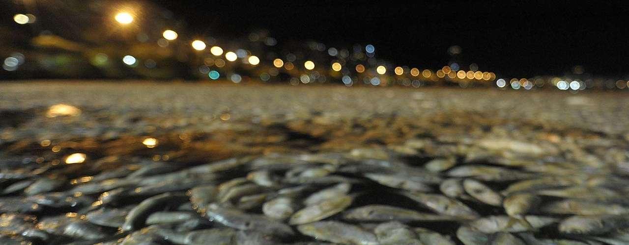 Quem chega à lagoa se depara com o espelho d`água, em grande parte, coberto pelos inúmeros peixes mortos, de diversas espécies, como Manjubinha e Acará