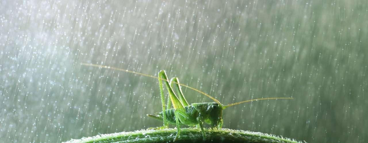 O russo Vadim Trunov fez uma série de registros que mostram como os insetos e outros pequenos animais enfrentam a chuva
