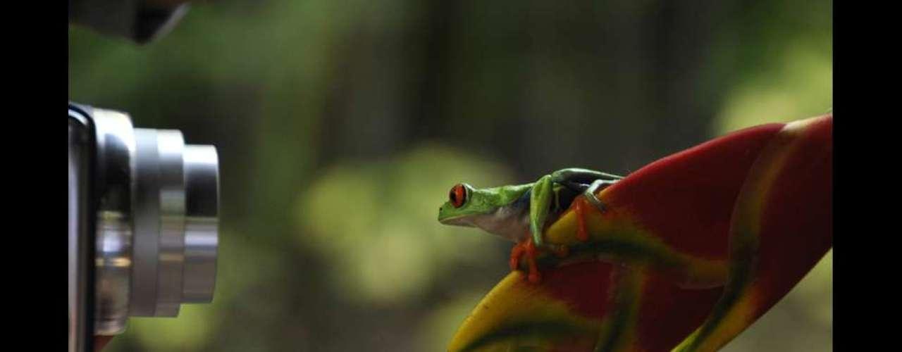 Esta simpática perereca de olhos vermelhos foi fotografada por Sally Harmon. O concurso de fotografias de viagem da National Geographic de 2013 está aceitando inscrições até o dia 30 de junho.