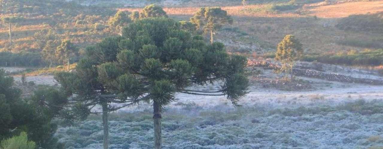 17 de maio - A vegetação demonstra a queda de temperatura da madrugada na cidade de Urupema
