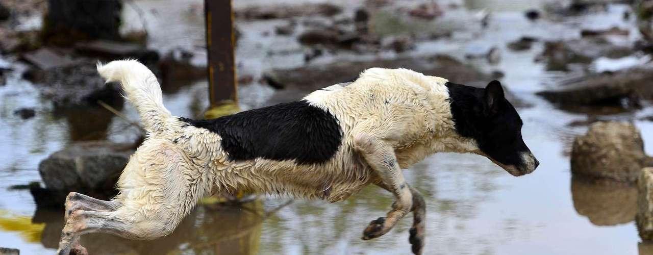 Animais circulam nas áreas alagadas