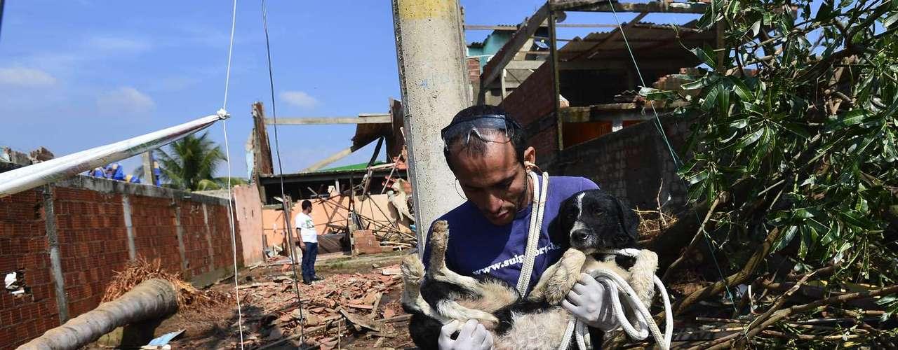 Muitos animais foram salvos após o rompimento da tubulação