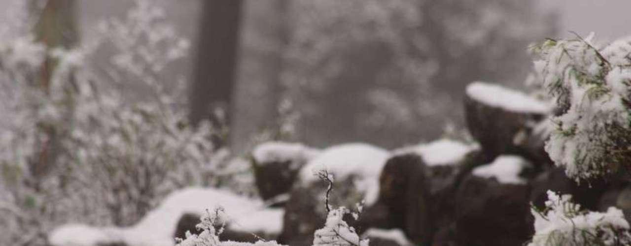 27 de agosto - Neve em São Joaquim (SC) na manhã desta terça-feira