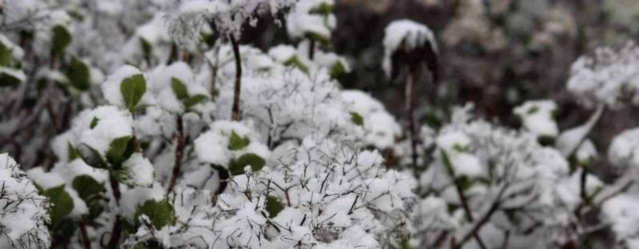 27 de agosto -Vegetação ficou coberta pela neve em São Joaquim (SC)