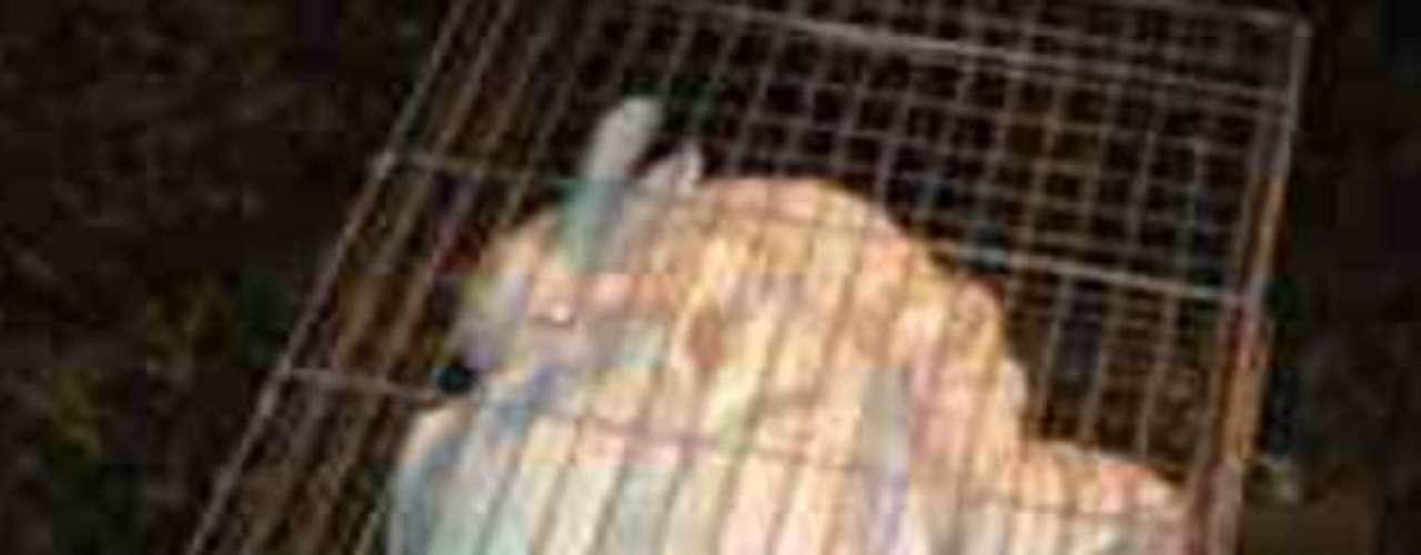 18 de outubro -Em transmissão direta de vídeo, internauta filmou coelhos que também teriam sido resgatados após maus-tratos