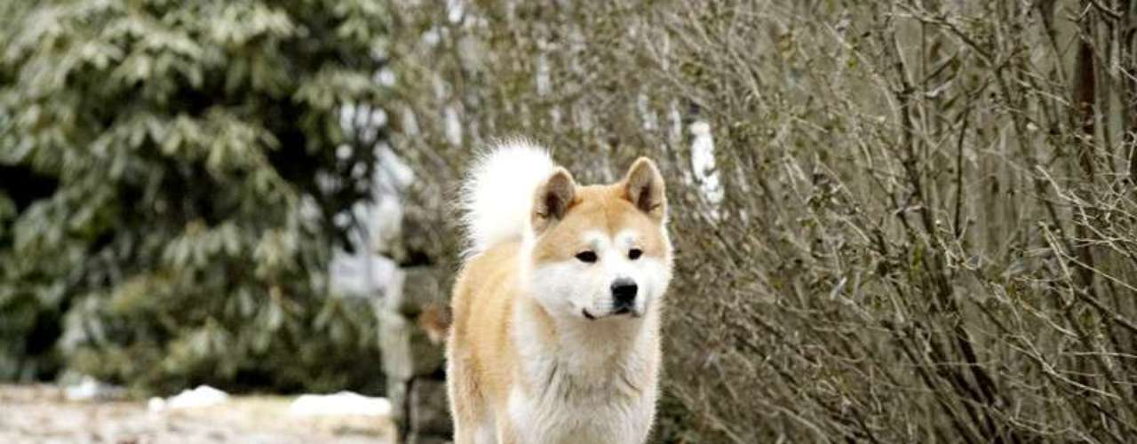 Sua cachorrinha e amigo me chupando - 2 part 10