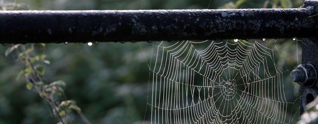 Ao contrário do que se imagina, as aranhas que representam um perigo real para nossa casa não produzem grandes teias