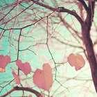 O passado sempre se expressa no presente, explica vidente