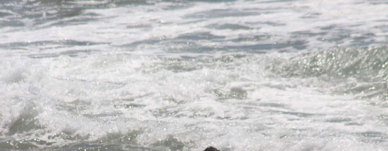 20 de dezembro - O último dia da primavera foi marcado por muito sol e calor em Santa Catarina. Os termômetros nesta sexta-feira chegaram aos 33ºC em Florianópolis e levaram muitos banhistas às principais praias da cidade