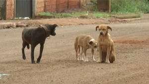 Maltratar animais é crime; pena pode chegar a um ano de detenção Video: