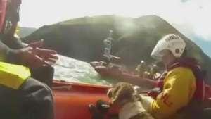 Equipe resgata cão que passou dez dias isolado em rochas Video: