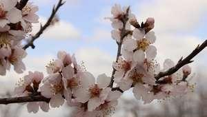 Rituales para recibir la primavera: cómo limpiar el aura