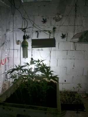 O governo uruguaio calcula que, com a lei, poderá retirar do narcotráfico entre US$ 30 milhões e US$ 40 milhões anuais, valor obtido com o consumo da droga no mercado ilegal e correspondente a cerca de 25 toneladas anuais Foto: Denise Mota / Especial para Terra