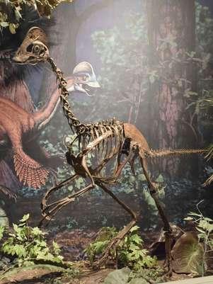"Cientistas identificam dinossauro ""Frango do Inferno"", o Anzu wyliei"