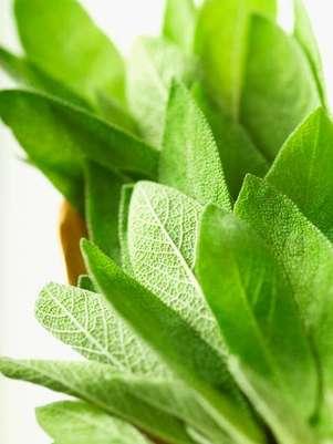 As ervas podem ser usadas sozinhas ou combinadas a temperos prontos; além de sabor, são responsáveis por dar aroma aos pratos Foto: Getty Images