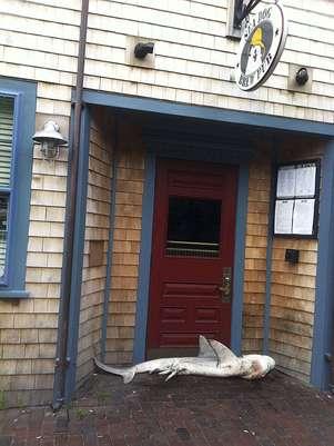 Animal foi encontrado por equipe de limpeza durante a manhã Foto: AP