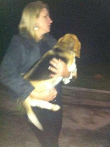 18 de outubro -Ativista carrega cão em foto divulgada pelo grupo Anonymous
