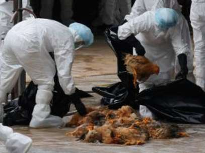Bird Flu Virus Doesn't Jump Between Humans According to China. Foto: AP