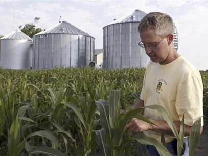 Farmer Matt Johnson inspects the leaves on a popcorn plant near grain storage bins in his popcorn crop fields on his family's farm in Redkey, Indiana June 28, 2012. All across the Midwest, where rows of popcorn normally thrive alongside fields of soybeans, American popcorn farmers have watched in horror as soaring triple-digit temperatures and weeks without rain have left corn stands stunted and crops withered. Foto: Brent Smith / Reuters In English