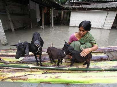 A flood affected victim puts her goats on a raft made from banana trees outside her flooded hut at Lachi Bishnupur village in the northeastern Indian state of Assam September 22, 2012. Foto: Utpal Baruah / Reuters In English