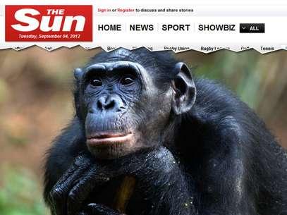 Chimpanzé Gina passou a assistir pornografia com frequência desde que ganhou uma TV Foto: The Sun / Reprodução