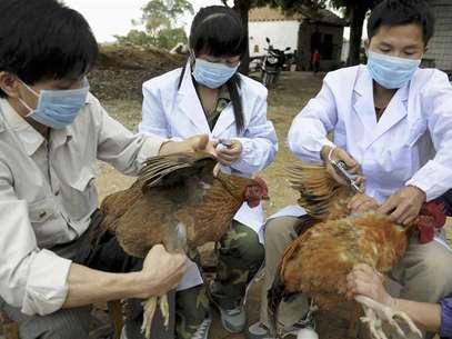 En la imagen, varias personas vacunan a gallinas en Shangsi, China, el 3 de abril de 2013.Foto China/Reuters
