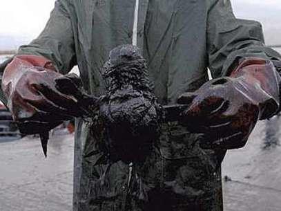 Animales afectados por el crudo. (Referencial) Foto: AP