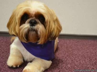 Dona diz que cão é calmo até perceber alguém triste ou perturbado Foto: Universidade de Bournemouth / Divulgação