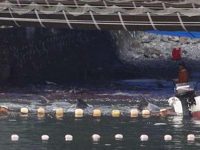 Japoneses começaram a matar alguns dos golfinhos capturados em Taiji nesta terça-feira Foto: Reuters
