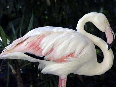 Ave estava no zoológico de Adelaide desde a década de 30 Foto: EFE