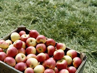 Além de saborosa, a maça ajuda a previnir e combater doenças Foto: Getty Images
