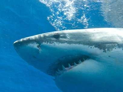 As chances de ser atacado por um tubarão são relativamente raras, mas podem aumentar em alguns lugares Foto: Getty Images
