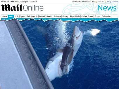 A foto de um tubarão devorando outro chamou a atenção de internautas do site Reddit Foto: Daily Mail / Reprodução