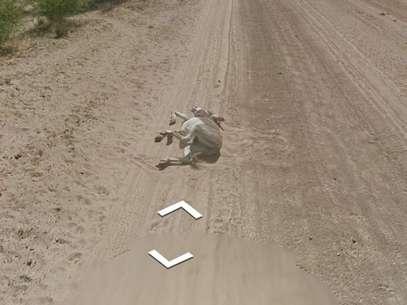 Sequência mostra burro envolto em poeira, sugerindo que recém caiu, e depois apenas imóvel, deitado Foto: Reprodução