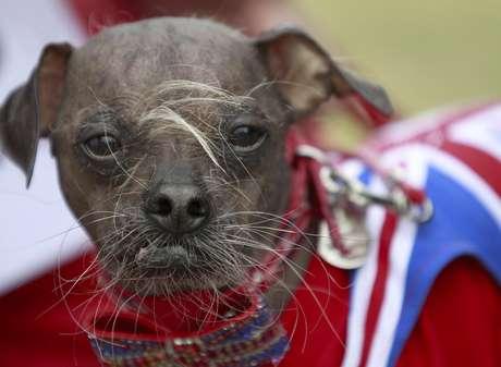 A este perrito ser tan feo le dio suerte. Gracias a esto se llevó el título del más feo del mundo.