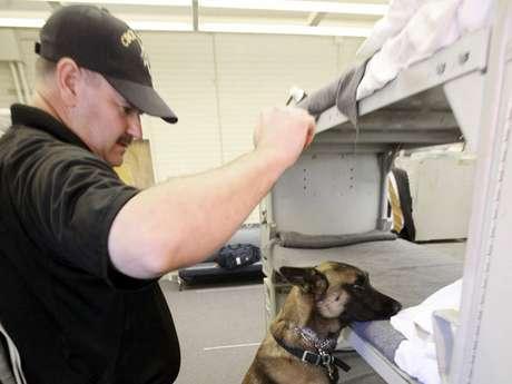 Como en el resto de Estados Unidos, la prisión estatal de Louisiana ha tenido que adaptarse a las dificultades económicas y a los recortes de presupuesto, y para ello ha reemplazado a parte de sus guardias con perros lobo que patrullan el perímetro carcelario.