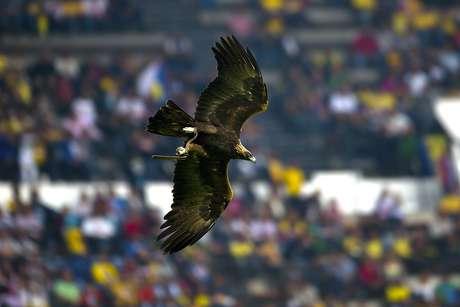 La postal del águila en pleno vuelo en el estadio Azteca, durante el medio tiempo del partido en el que América derrotó 4-0 al Atlante.