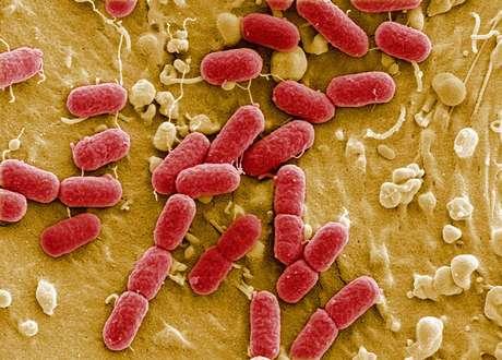 Bactérias são fundamentais para a sobrevivência humana