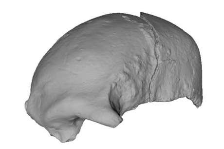 Crânio encontrado no Quênia pode revelar linhagem humana desconhecida até agora Foto: IFL Science/President and Fellowns of Harvard College / Reprodução